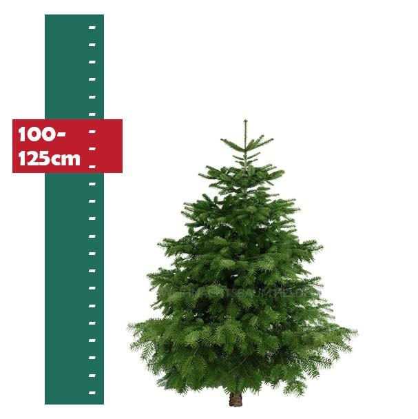 Weihnachtsbaum-Helden-Nordmanntanne-100-125cm