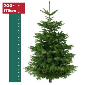 Weihnachtsbaum-Helden-Nordmanntanne-175-200cm-Foto1