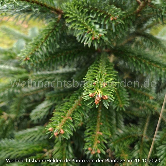 Weihnachtsbaum-Helden-Nordmanntanne-Plantage-Photo10-1