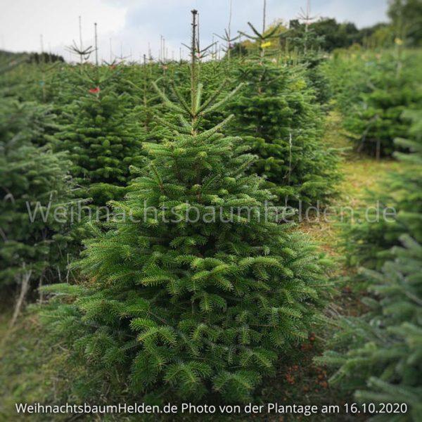 Weihnachtsbaum-Helden-Nordmanntanne-Plantage-Photo12-2