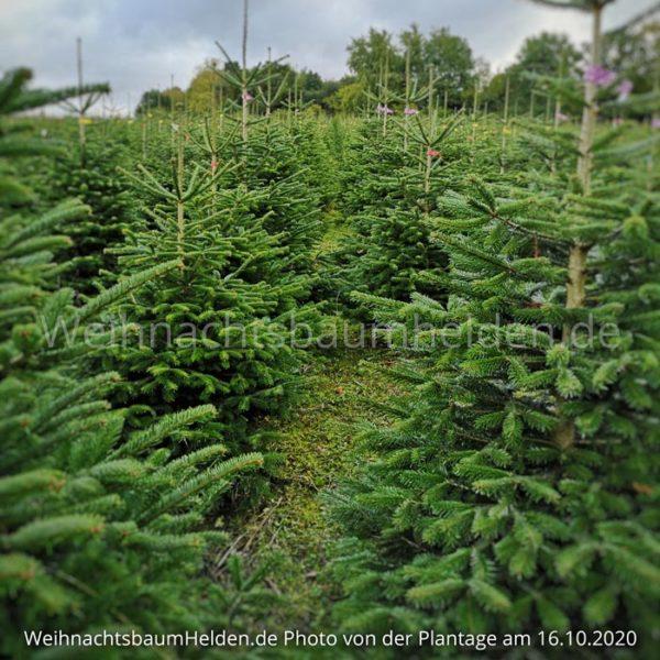 Weihnachtsbaum-Helden-Nordmanntanne-Plantage-Photo13-5