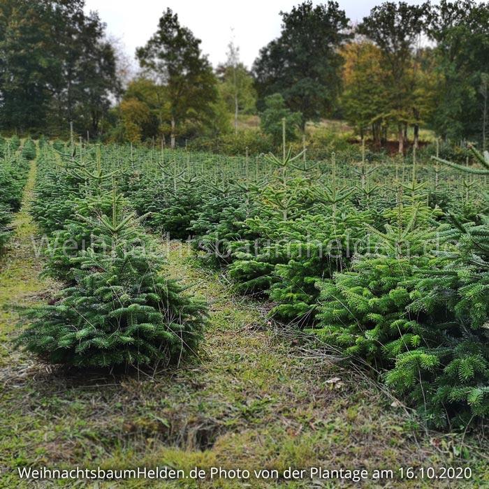 Weihnachtsbaum-Helden-Nordmanntanne-Plantage-Photo15-3