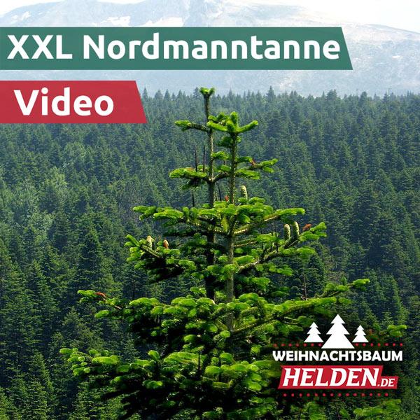 XXL-Nordmanntanne-Video-Frankfurt-Aufstellung-Weihnachtsbaum-Helden-1