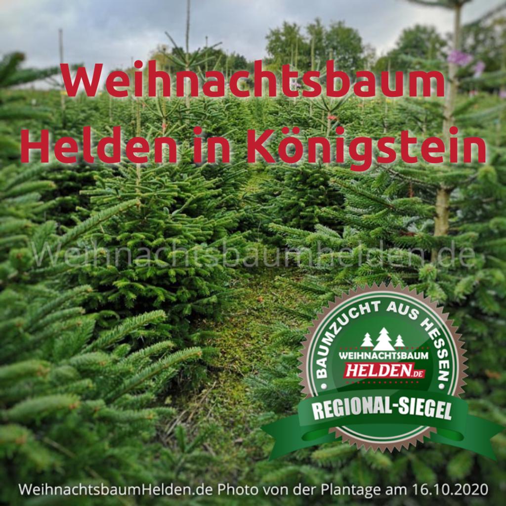 Weihnachtsbaum-Helden-in-Koenigstein-Regional_Siegel
